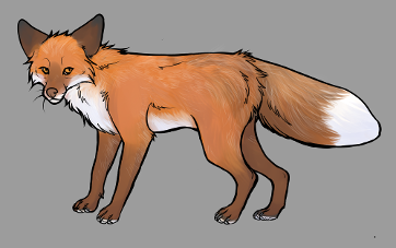 Red Fox Colour Mutations - Amber Gold Fox