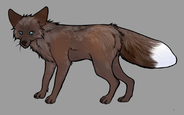 Red Fox Colour Mutations - Colicott Brown