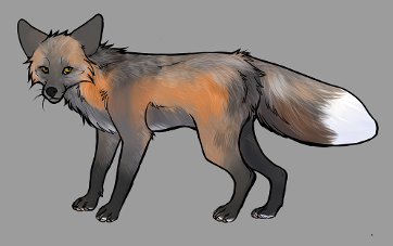 Red Fox Colour Mutations - Pearl Cross