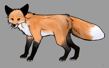 Red Fox Colour Mutations - Wildfire