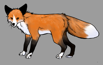 Red Fox Colour Mutations - Red Whitemark