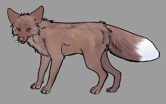 Red Fox Colour Mutations - Amber