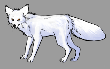 Red Fox Colour Mutations - White Marble