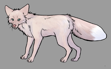 Red Fox Colour Mutations - Pink Champagne
