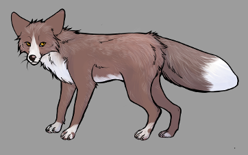 Red Fox Colour Mutations - Amber Pearl Whitemark