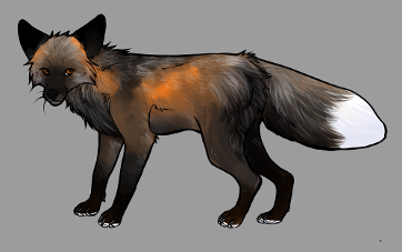 Red Fox Colour Mutations - Silver Cross